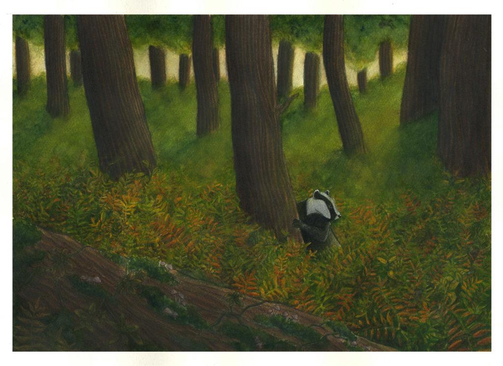 Illustration blaireau forêt océane azeau