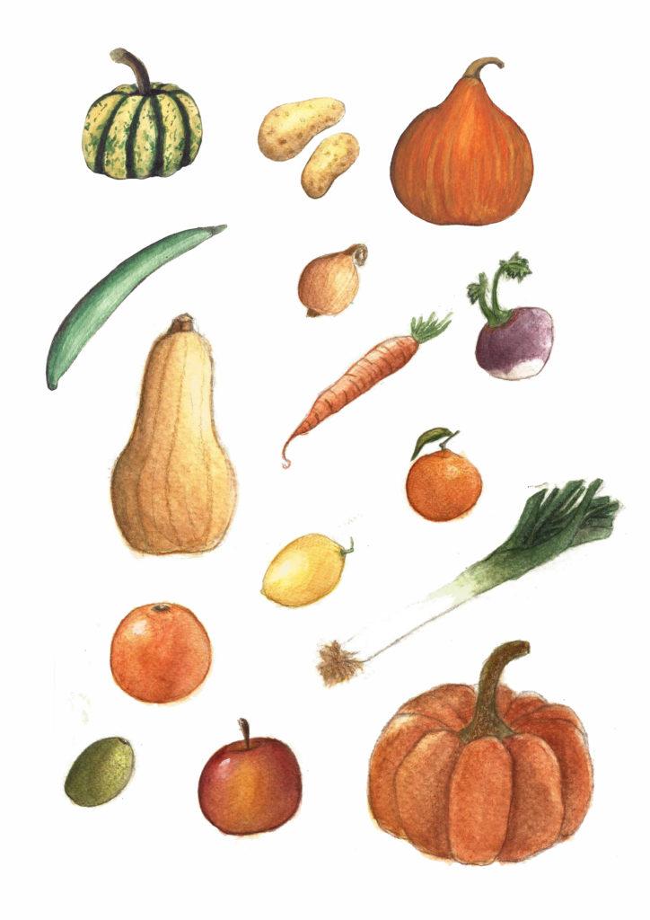 Illustration Légumes Fruits océane azeau illustratrice