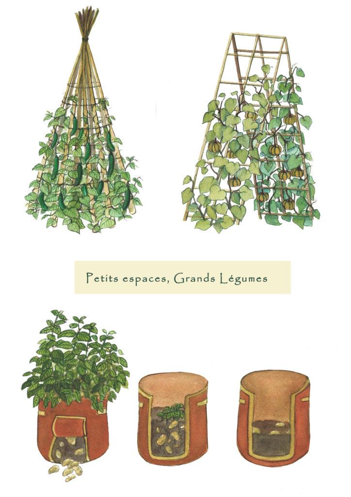 Illustration potager urbain culture verticale Océane Azeau illustratrice