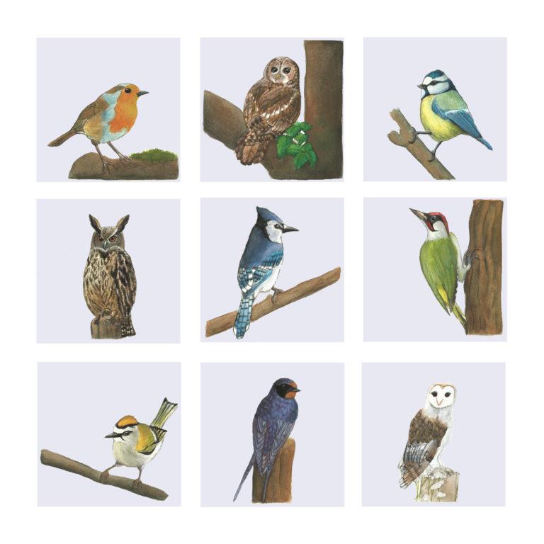 Illustration oiseaux gouache Océane Azeau Illustratrice