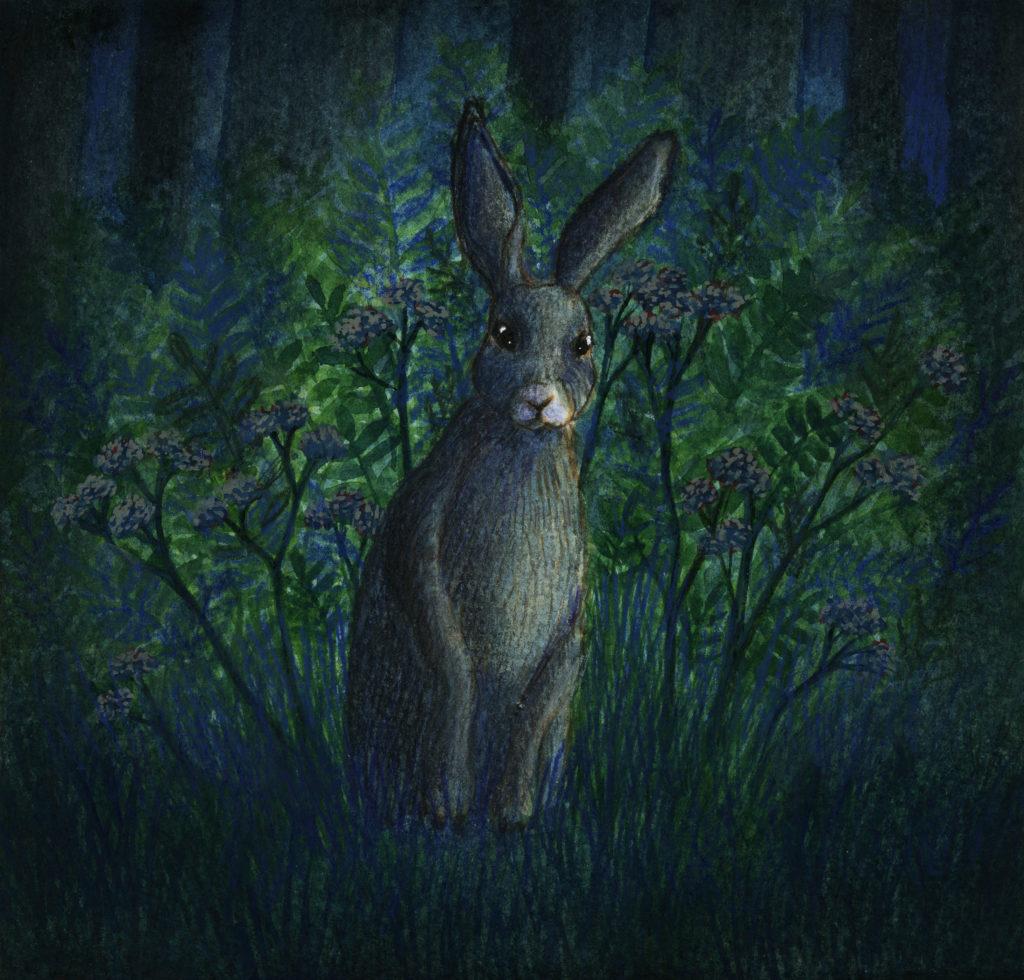 illustration océane azeau lapin fougères