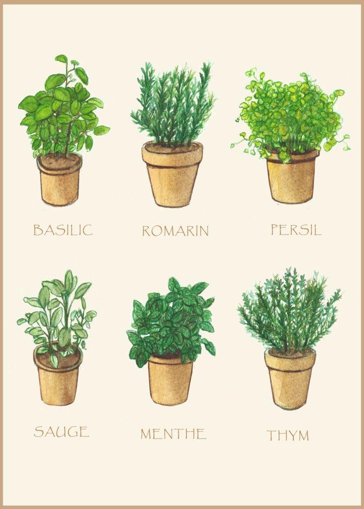 illustration aromates