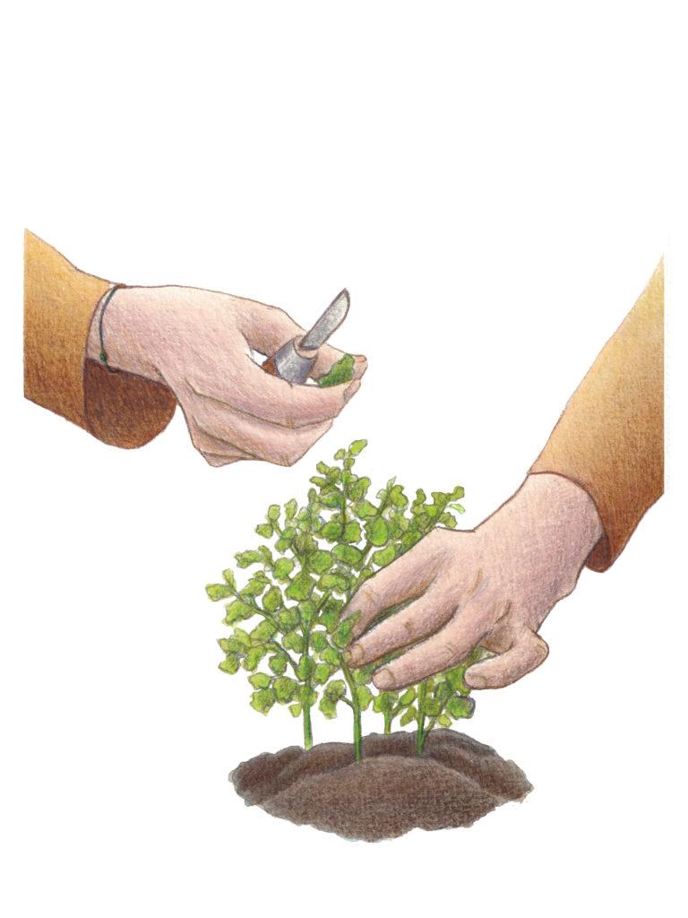 Geste jardinier illustration