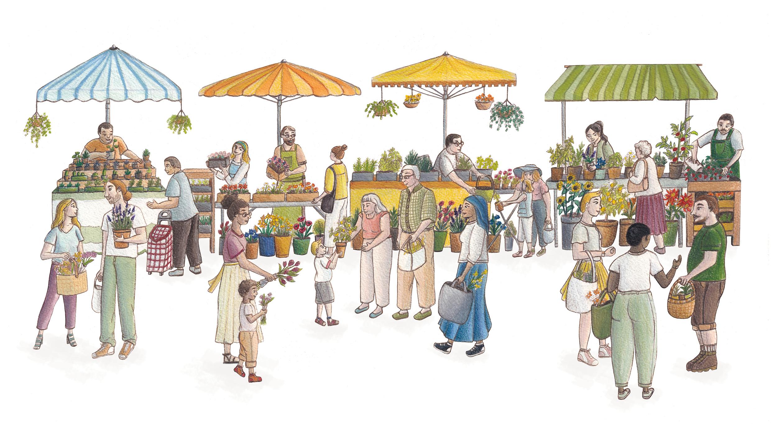 illustration marché plantes