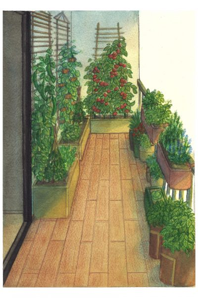 Illustration océane azeau balcon potager