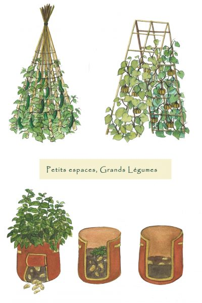 Illustration potager urbain culture verticale Océane Azeau illustratrice